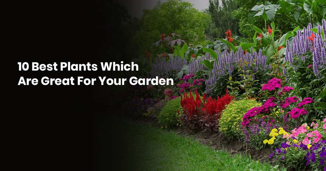 10 Best Plants Which Are Great For Your Garden