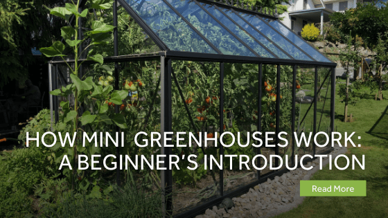 How Do Mini Greenhouses Work A Beginner?s Introduction