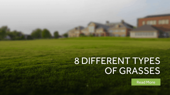 8 Different Types Of Grasses