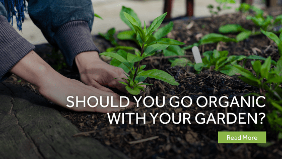 Should You Go Organic With Your Garden?