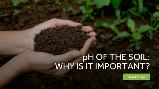 PH Of The Soil - Why Is It Important?