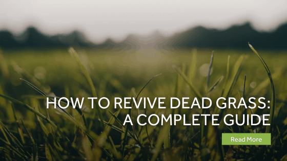 How To Revive Dead Grass A Complete Guide