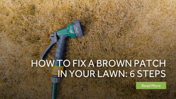 How To Fix A Brown Patch In Your Lawn 6 Steps