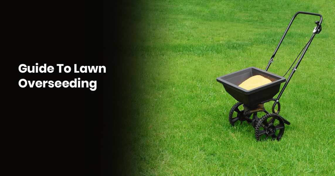 Guide To Lawn Overseeding