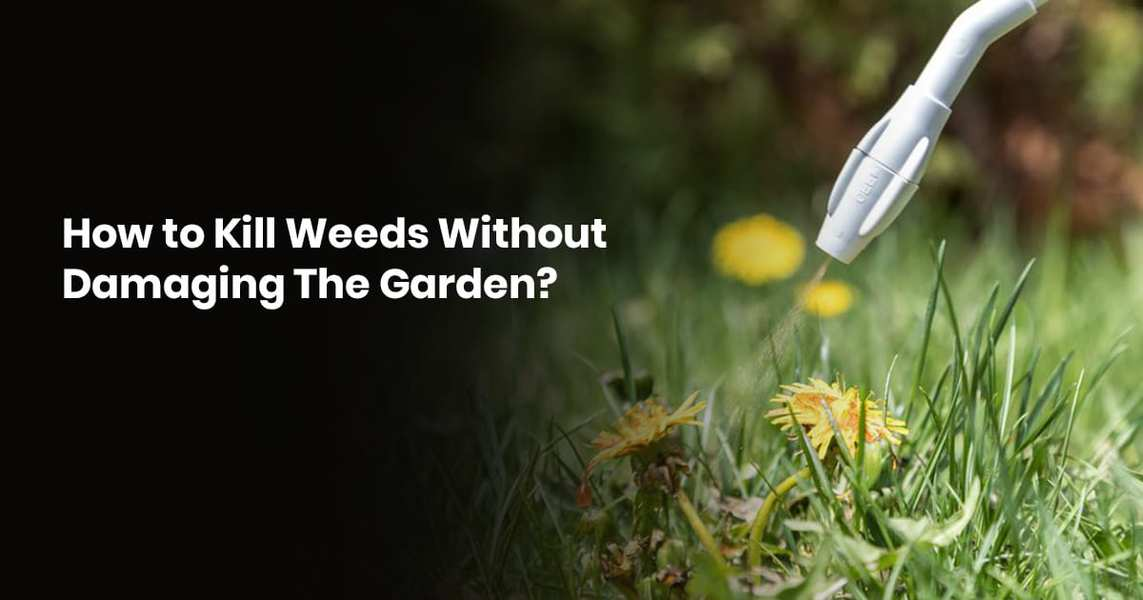 How To Kill Weeds Without Damaging The Garden