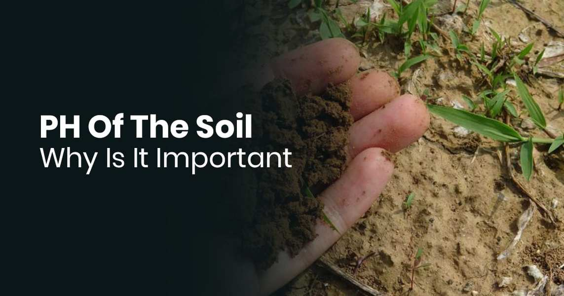 PH Of The Soil - Why Is It Important