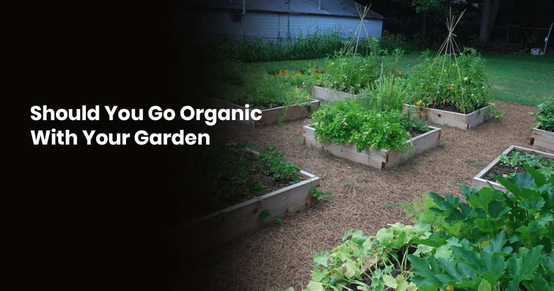 Should You Go Organic With Your Garden 1